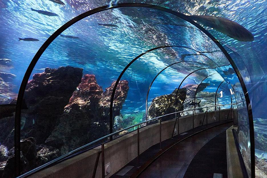 Das Aquarium von Barcelona